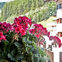 Glanzer Homes Pension Sölden Blumen